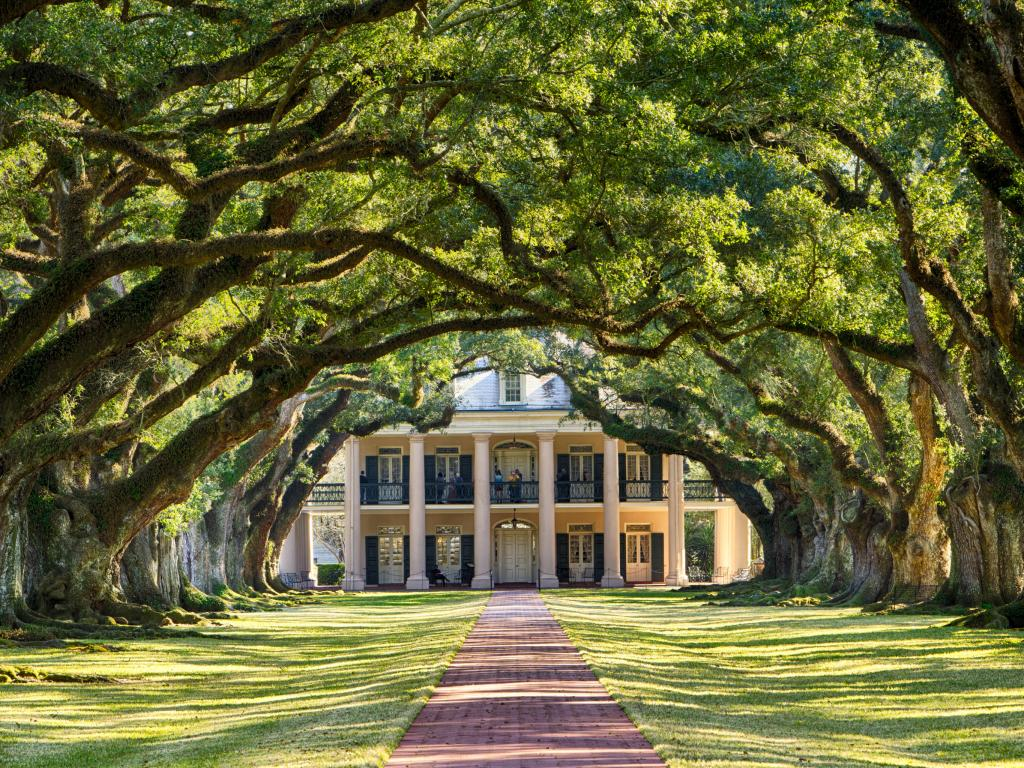 Driveway to the Mansion at Oak Alley Plantation, Louisiana