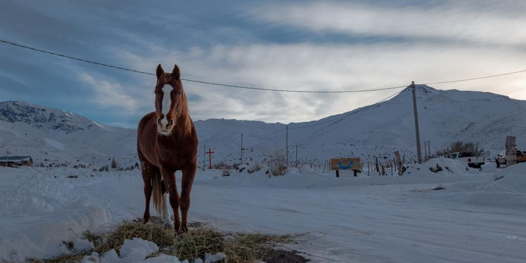 A horse stood in front of snowy mountains in Mendoza, Argentina