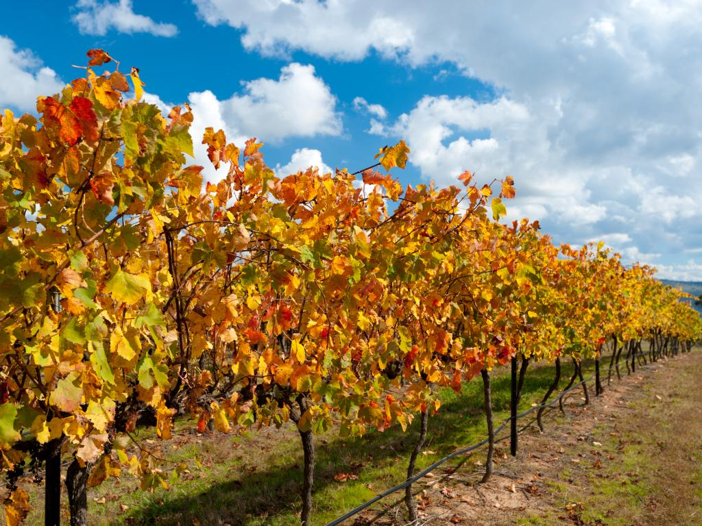 The Central Tablelands wine region tour will take you through quirky small towns north of Canberra.