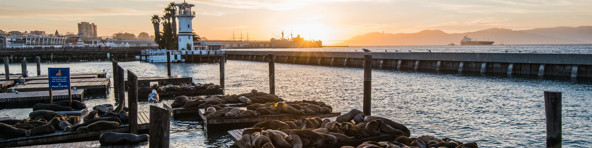 Seals on wooden platforms along Pier 39 in San Francisco at sunset.