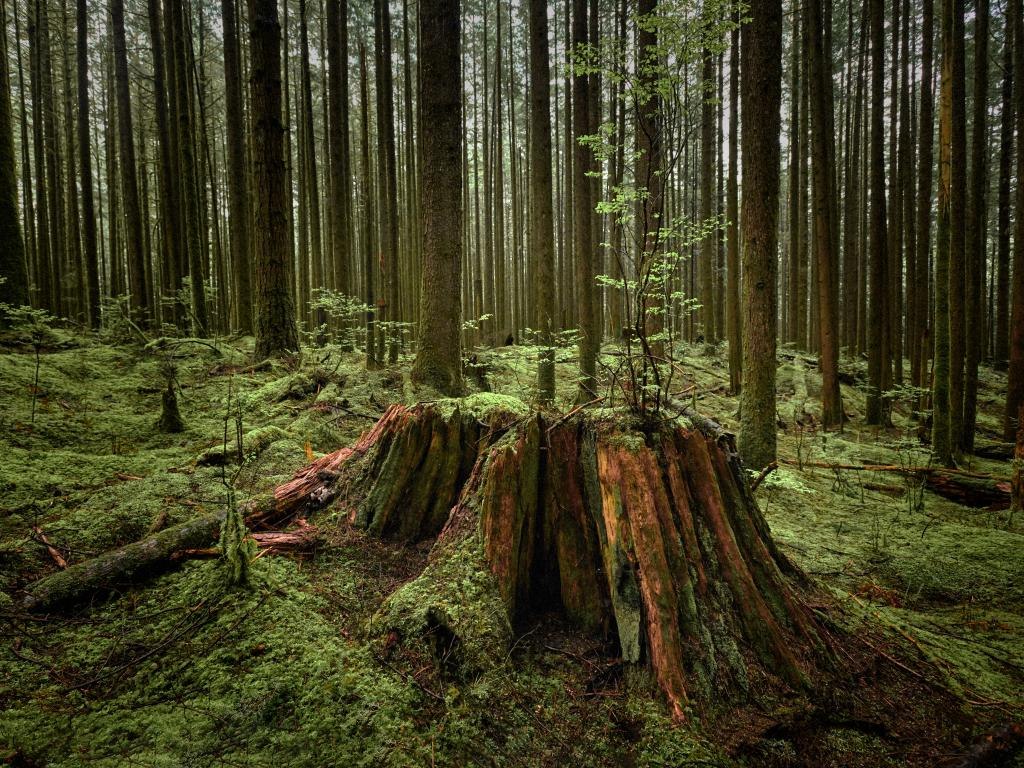 Forest at Golden Ears Provincial Park, British Columbia