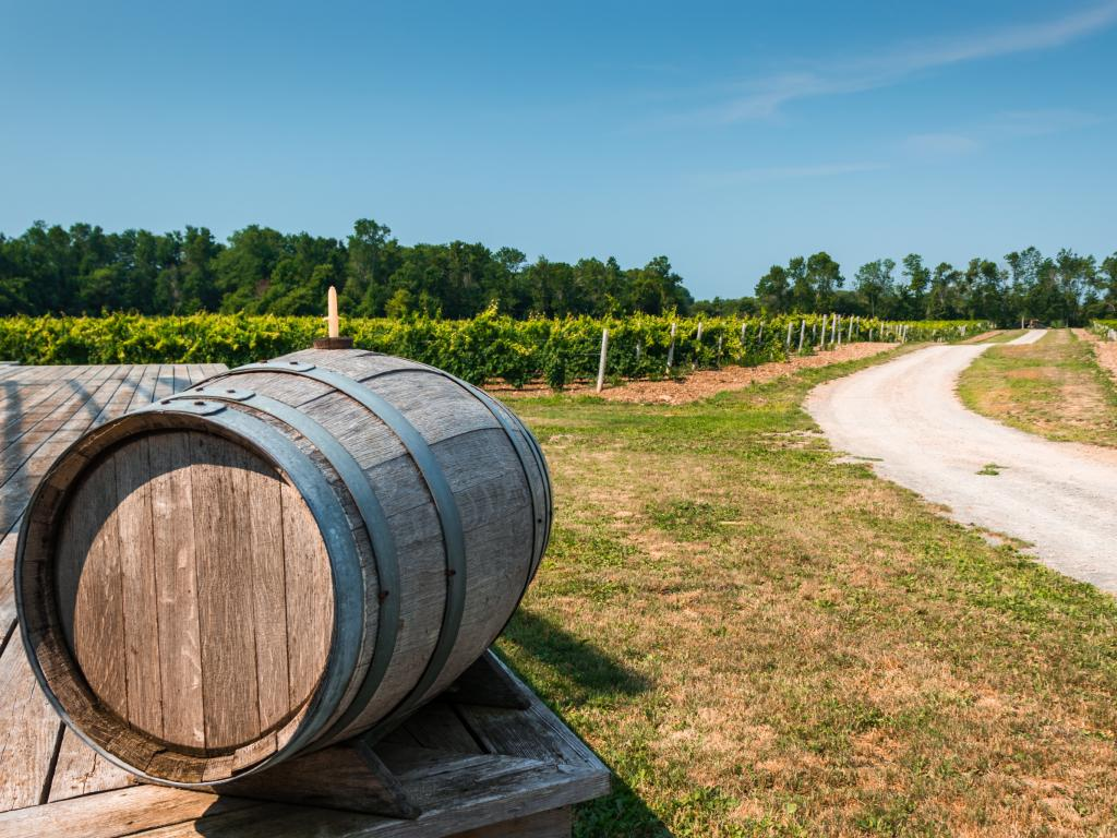 Vineyard in Prince Edward County in Ontario with a keg at the front