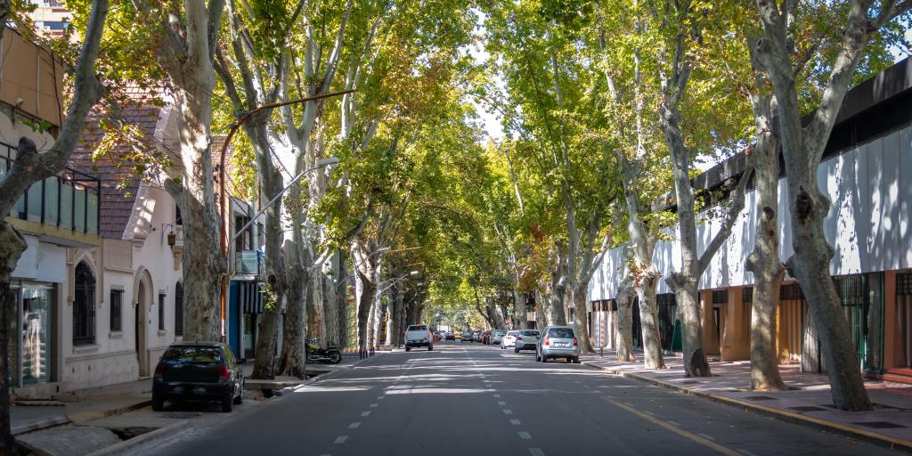 Wide, empty tree-lined street in Mendoza, Argentina
