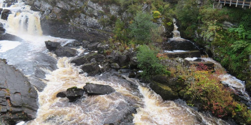 Water crashing over Rogie Falls, Scotland, with forest in the background and autumnal flora to the side