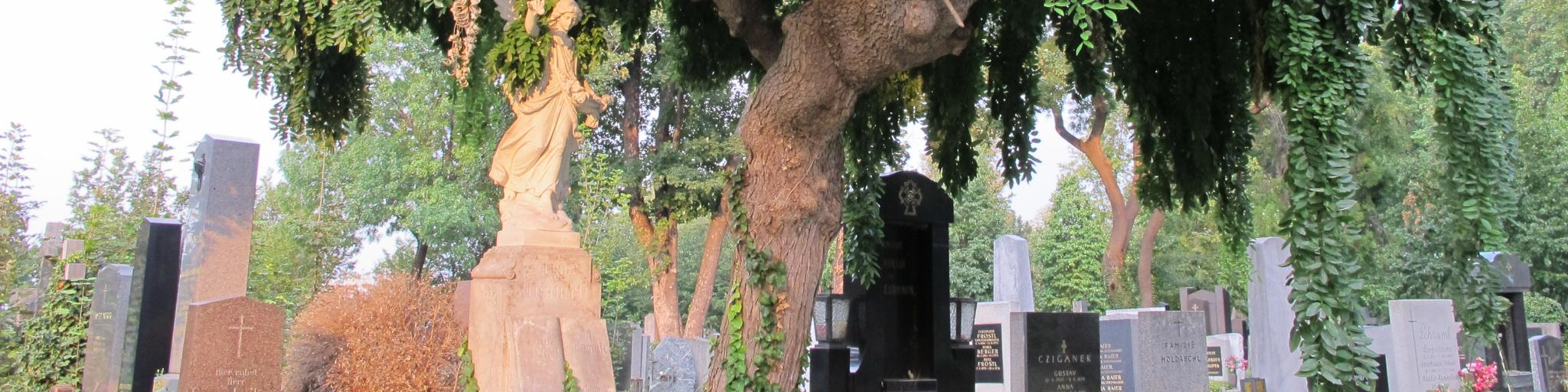A tree towers over the headstones of Vienna Central Cemetery