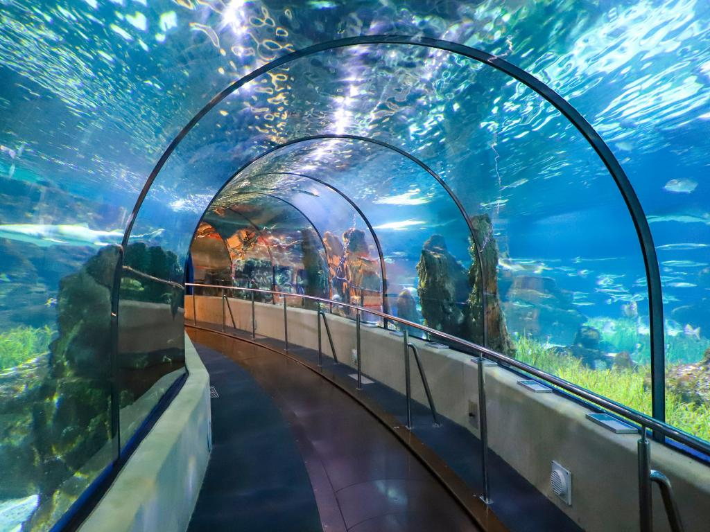 Underwater Tunnel In Barcelona's L'Aquarium - a great thing to do with kids