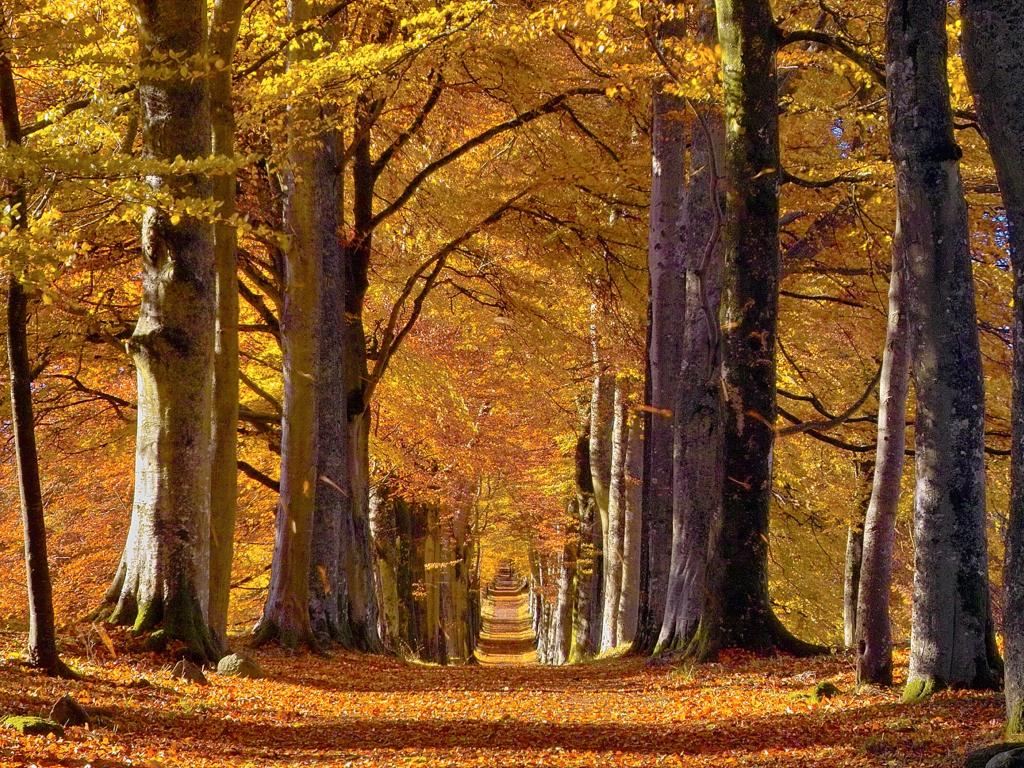 Trees topped with bright orange and yellow autumn leaves line a road in Perthshire, Scotland