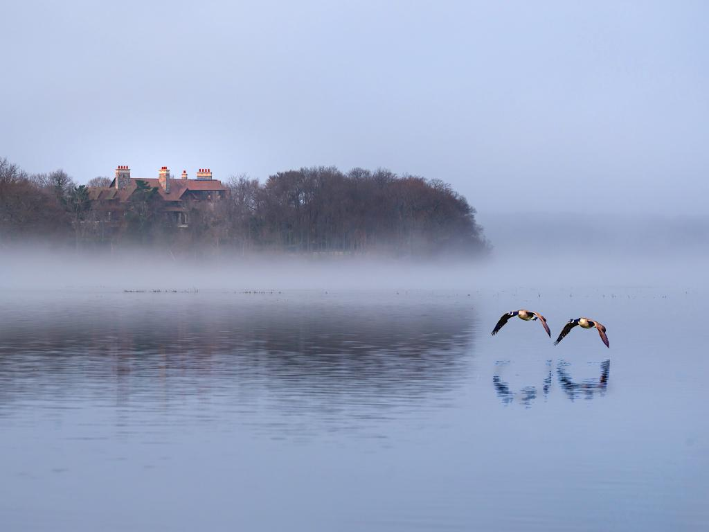Canadian geese flying through the Stony Brook harbor on a misty morning.