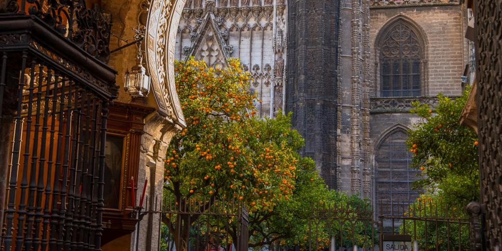 Orange trees in the Patio de los Naranjos stand out against the grand Gothic Seville Cathedral