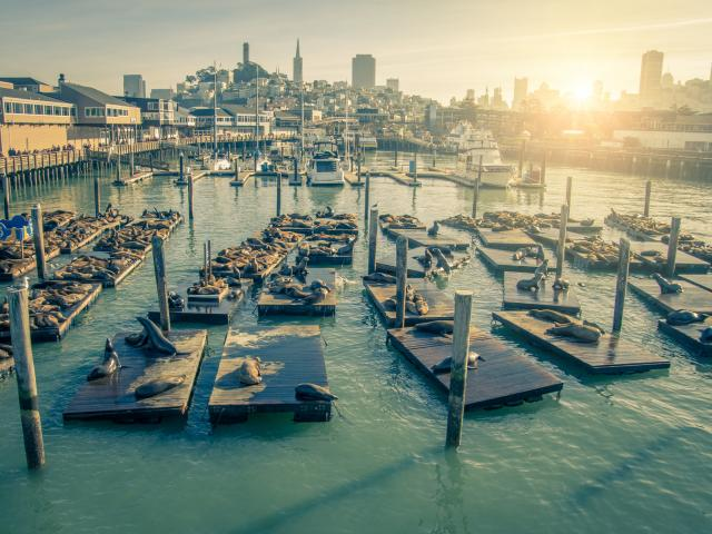 Seals relaxing on wooden platforms at Pier 39 in San Francisco, California.