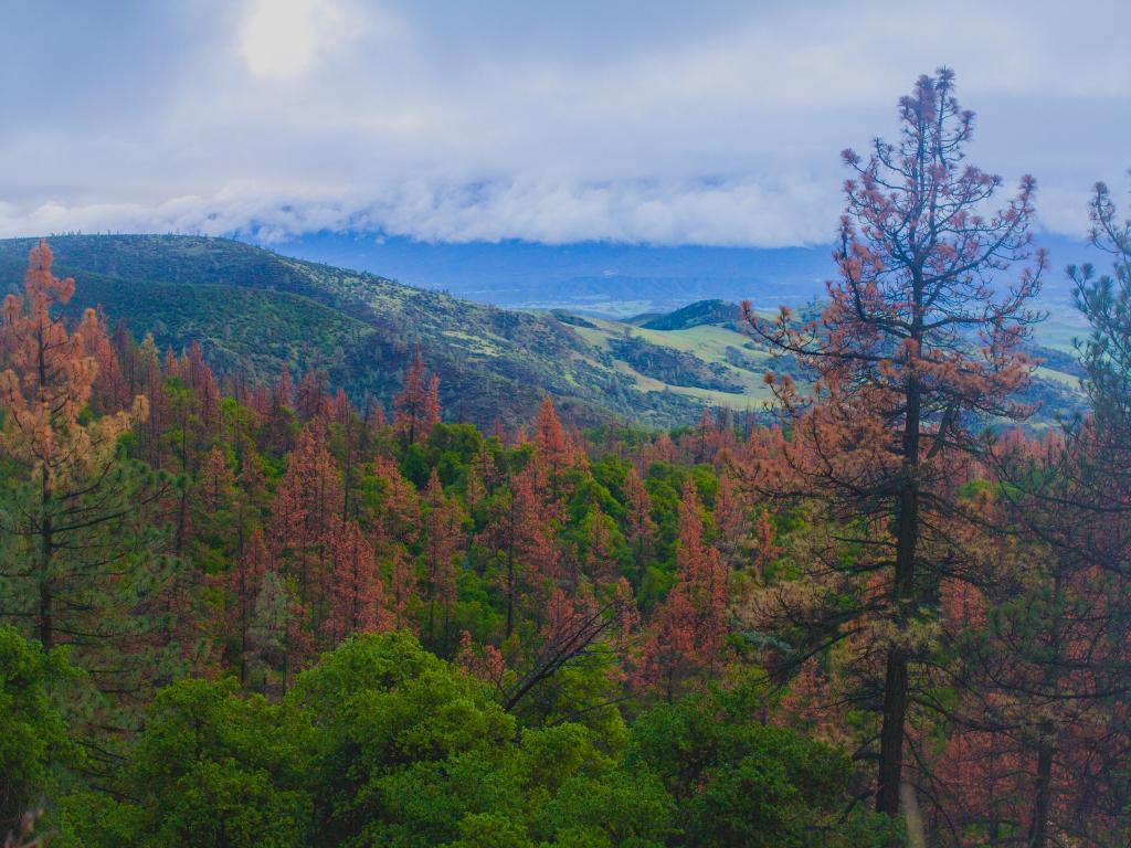 A view down to Santa Ynez Valley from Figueroa Mountain in California's Los Padres National Forest.