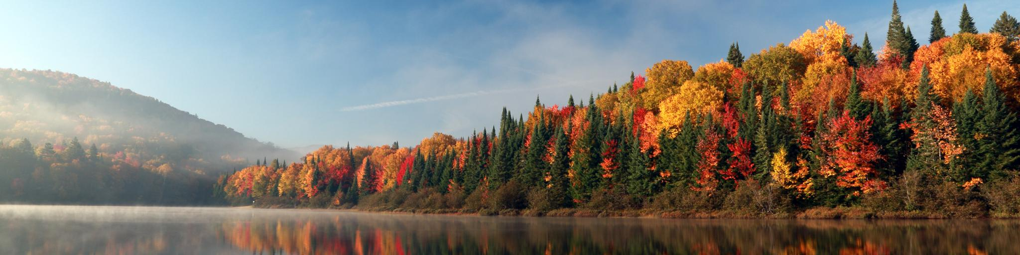 Bright autumn leaves in a forest on the edge of a lake in the Mont-Tremblant National Park, Quebec.