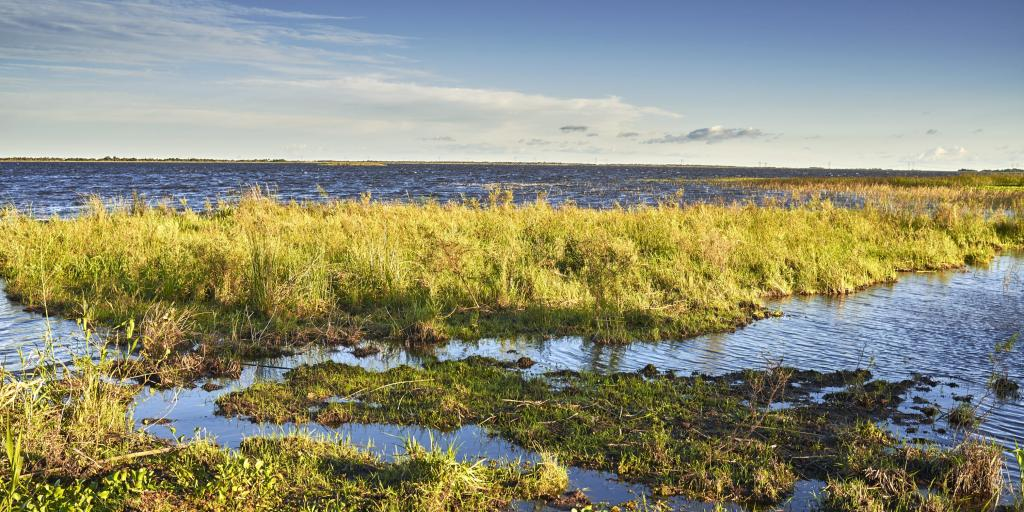 Long green grass and water in the wetlands of the Nature Reserve Esteros del Ibera, Argentina.
