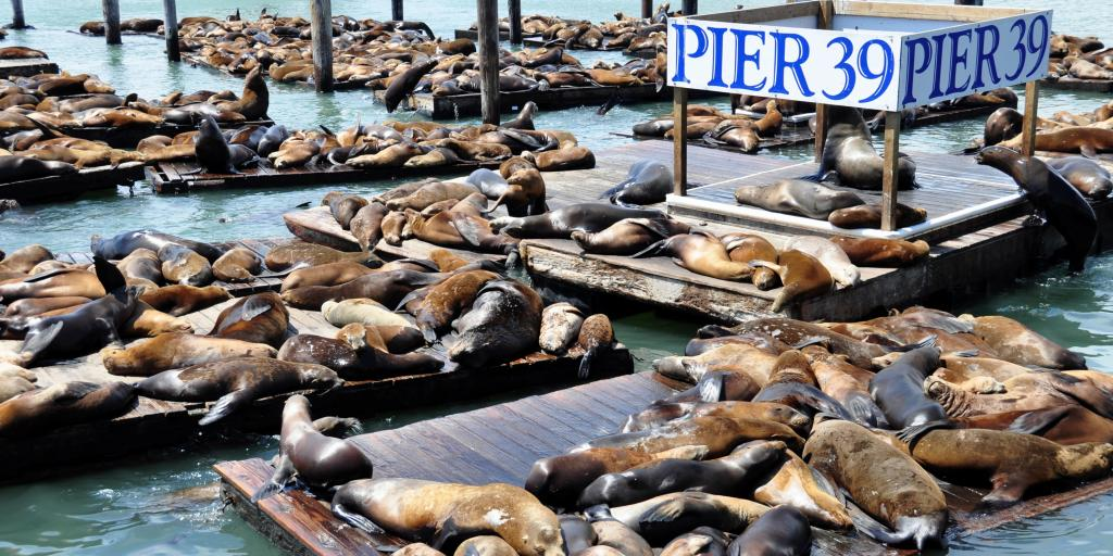 Sea lions relaxing on Pier 39 in San Francisco