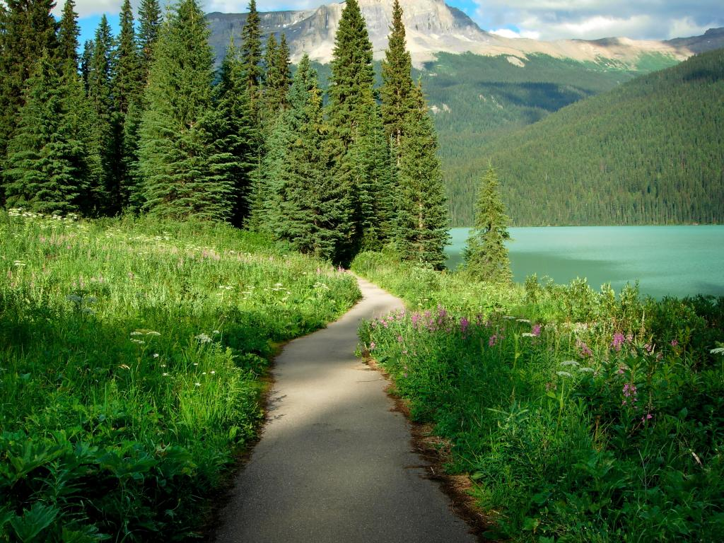 Trail in the Canadian Rockies, British Colombia, Canada