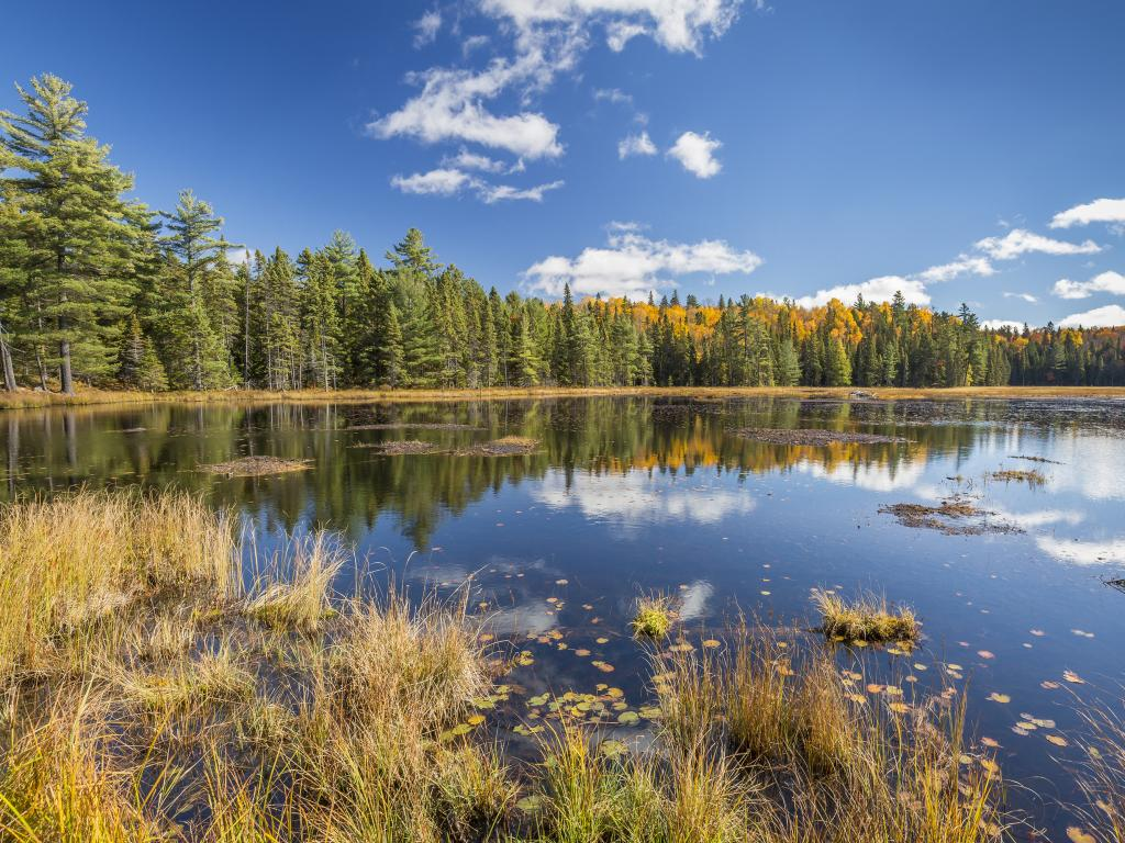 Beaver Pond surrounded by forest in the Algonquin Provincial Park, Ontario, Canada.