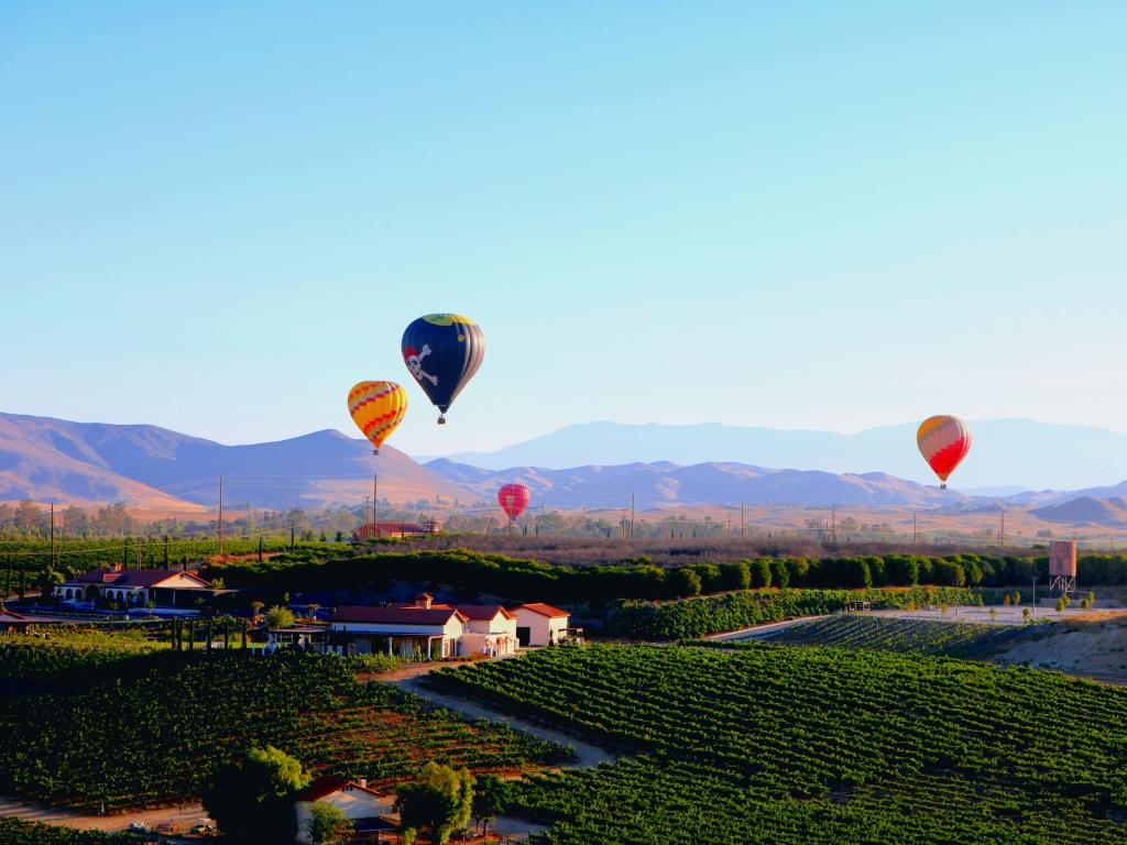 Hot air balloons rising above a vineyard in Temecula on a sunny day with a silhouette of mountains in the background.