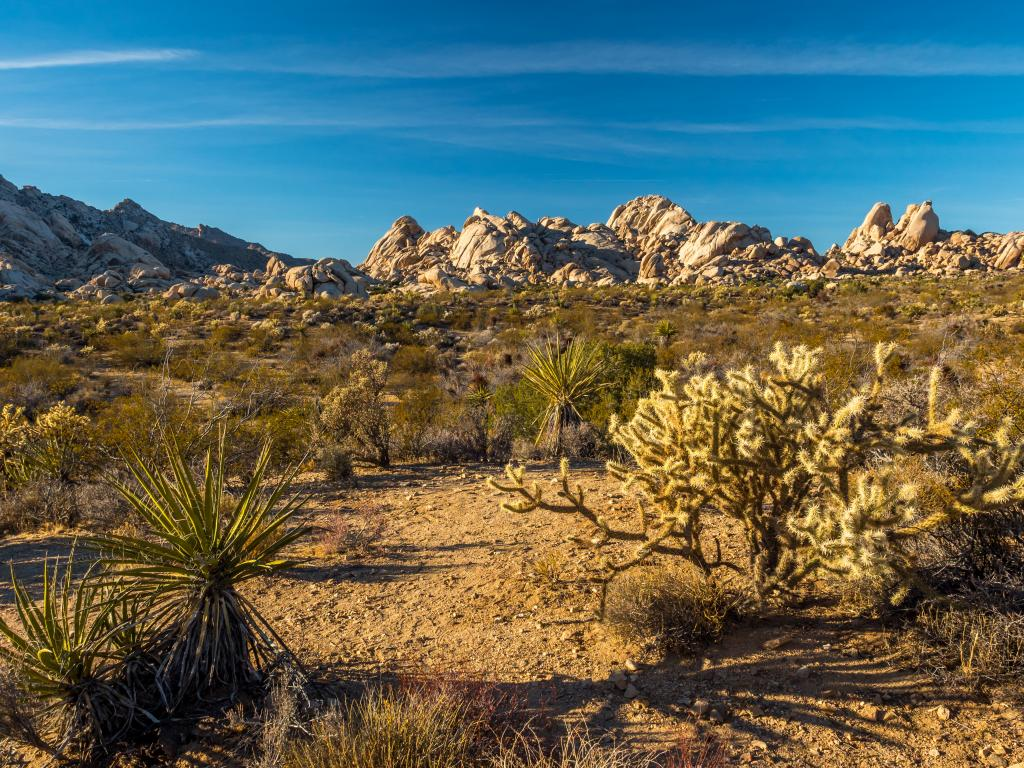 Desert landscape of the Mojave National Preserve with rock formations and different kinds of cactus.