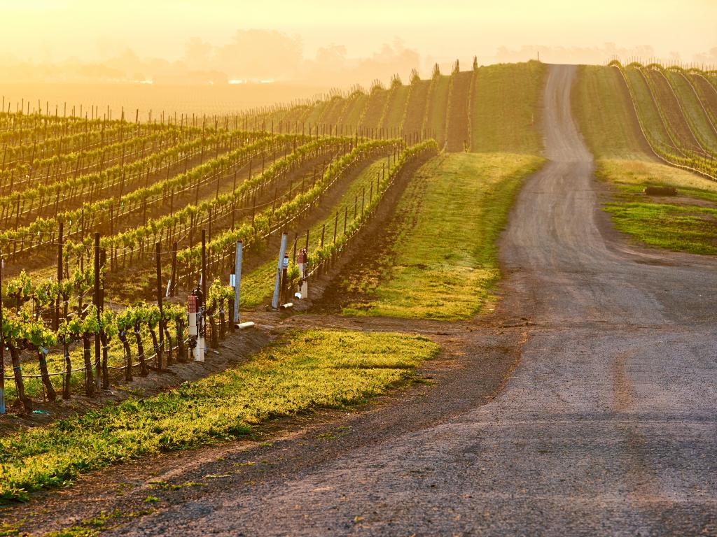Vineyards along a country road at sunrise in Napa Valley, California