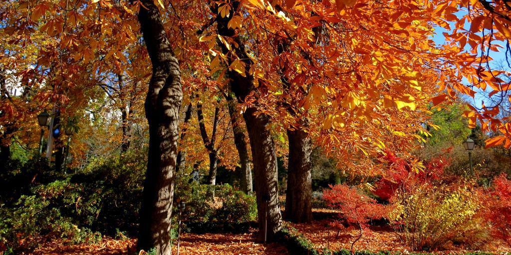 Bright orange autumn leaves in Madrid's Jardin Botanico