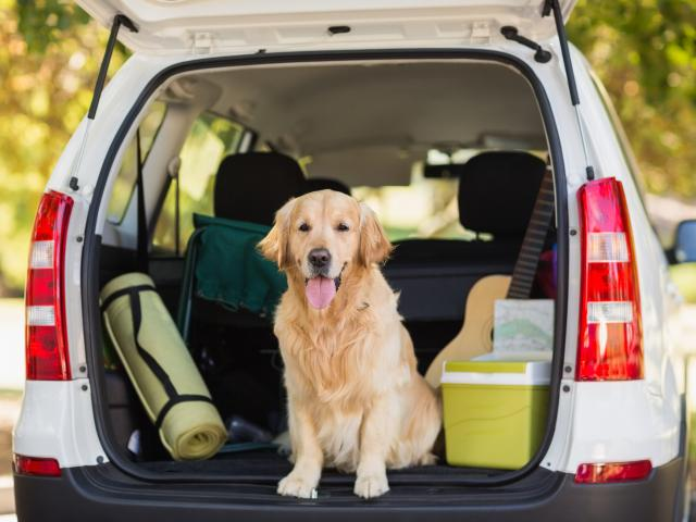 How to do a road trip with your dog: The ultimate guide